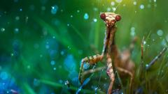 Cool Praying Mantis Wallpaper 37736