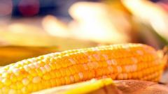 Corn 37693