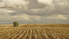 Corn Wallpaper 37692