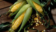 Corn Wallpapers 37688