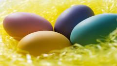 Eggs Wallpaper 14973