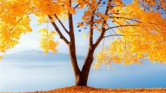 Fall Desktop Wallpaper 15899