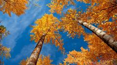 Fall Desktop Wallpaper 15901
