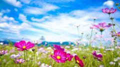 Flower Wallpaper 16730