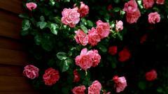 Flower Wallpaper 16734