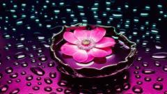 Flower Wallpaper 16738