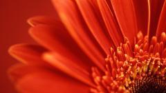 Flower Wallpaper 16739