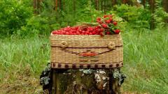 Food Basket Wallpaper 43091