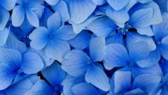 Free Flower Wallpaper 16736