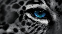 Free Leopard Backgrounds 18414