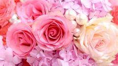 Free Pink Roses Wallpaper 23387