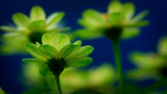 Green Flowers Wallpaper 17348