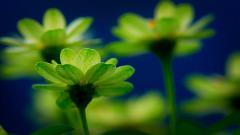 Green Flowers Wallpaper 17348