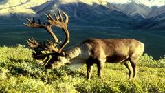 Hunting Wallpaper 5545
