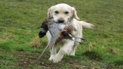 Hunting Wallpaper 5551