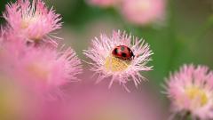 Ladybugs 15639