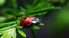 Ladybugs 15646