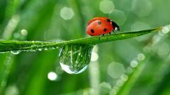 Ladybugs 15647