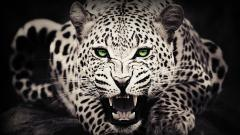 Leopard Background 18417