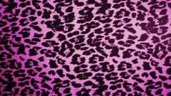 Leopard Backgrounds 18411