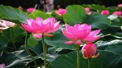 Lotus 22579