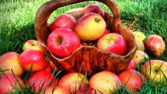 Lovely Food Basket Wallpaper 43090