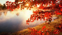 Maple Tree Wallpaper 30979