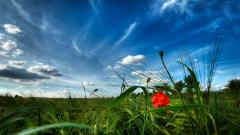Nature Wallpapers HD 8524