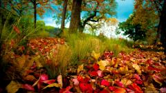 Nature Wallpapers HD 8532
