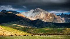 New Zealand Landscape 28476
