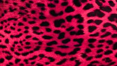 Pink Leopard Print Wallpaper 20506