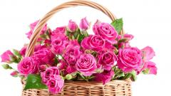 Pink Roses Background 23391
