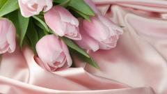 Pink Roses Wallpaper 23386