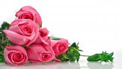 Pink Roses Wallpaper 23389