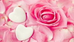 Pink Roses Wallpaper 23400