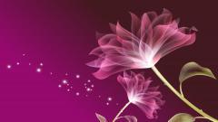 Pink Wallpaper 15625