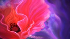 Poppy Flowers 14012