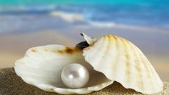 Seashell Wallpaper 25188