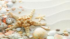 Seashell Wallpaper 25199