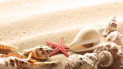 Seashells 25197