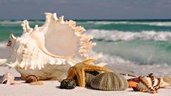 Seashells 25200