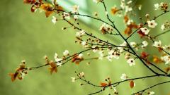Springtime Wallpaper 36875