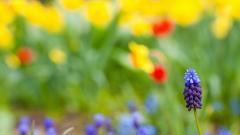 Summer Flowers 29972