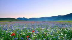Summer Flowers 29974