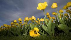 Summer Flowers 29979