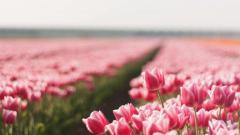 Summer Flowers 29983