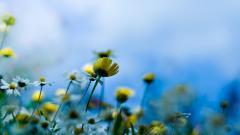 Summer Flowers 29985