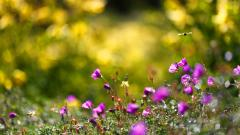 Summer Flowers Background 29981