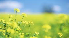 Summer Flowers Background 29994