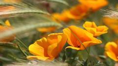 Summer Flowers Wallpaper 29976